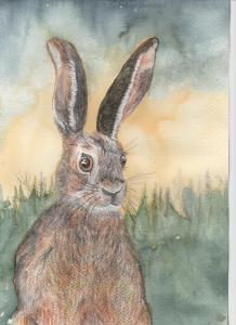 hare-001